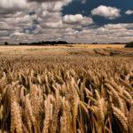 Сельхозпредприятия Томской области получат господдержку на оздоровление почвы